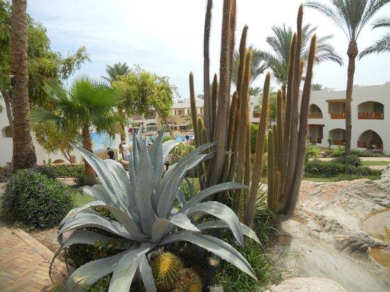 Royal Grand Sharm Hotel: кактусы
