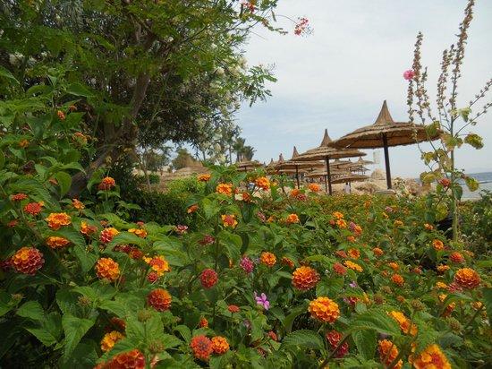 Royal Grand Sharm Hotel: вид у моря
