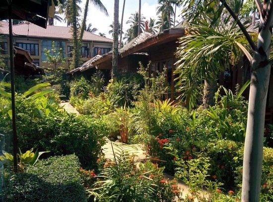 Lipa Bay Resort : The garden