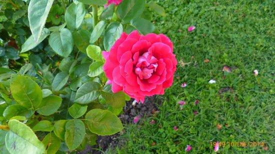 Hostería Postal De Las Sierras: Rosa del jardín de entrada