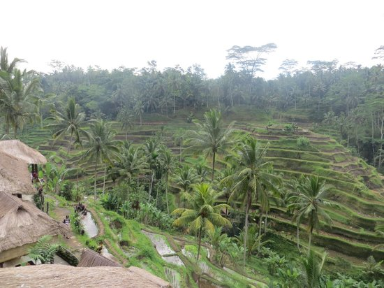 Tegalalang Rice Terrace: terrace views
