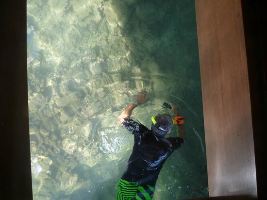 Manava Beach Resort & Spa - Moorea: The glass bottom / coffee table view