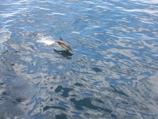 Highland Hotel: Dolphin