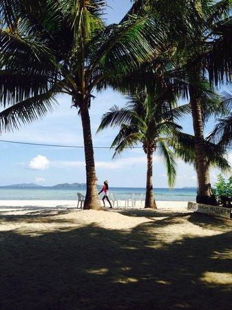 Malcapuya Island : Beautiful palm trees