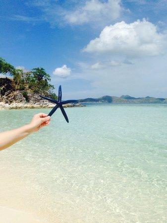 Malcapuya Island: A starfish from the paradise!