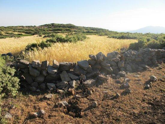 Dar Rihana: Promenade dans les environs du gîte