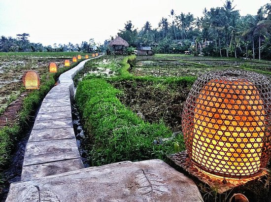 Mathis Retreat: fancy a walk on the rice paddies?