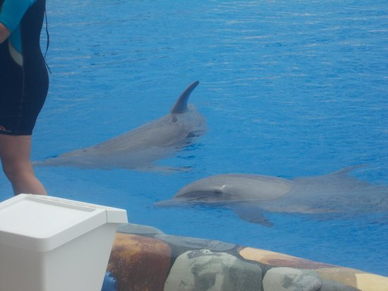 Aqualand Costa Adeje : dolphin show a must see