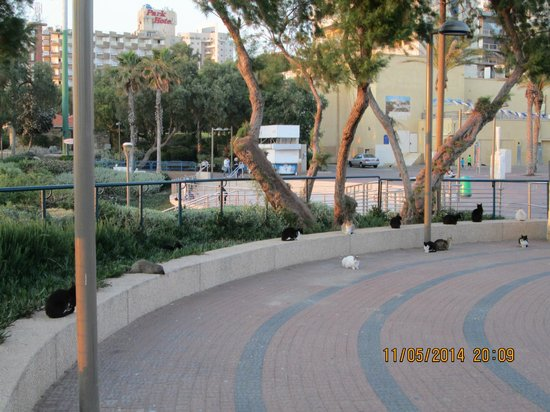 Inter Active Atzmaut Square: санитары города