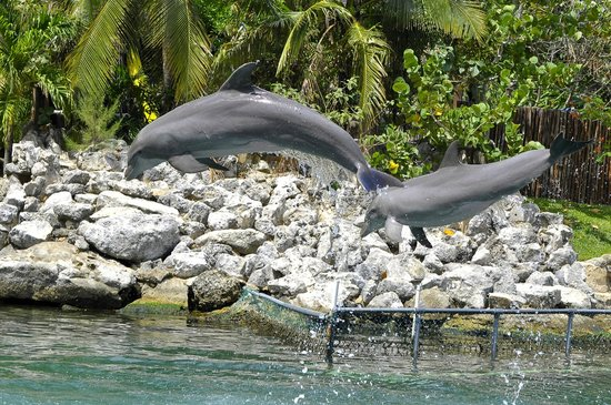 Dolphin Discovery Puerto Aventuras: Dolphins jumping at the end of our visit