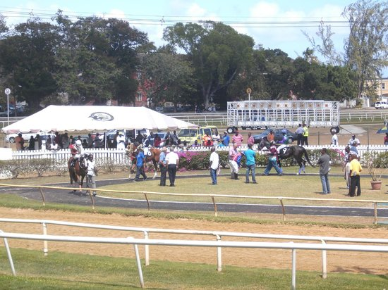 Garrison Savannah - Barbados Turf Club: Parade Ring