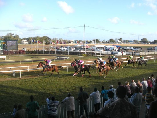 Garrison Savannah - Barbados Turf Club : Probably another loser of mine