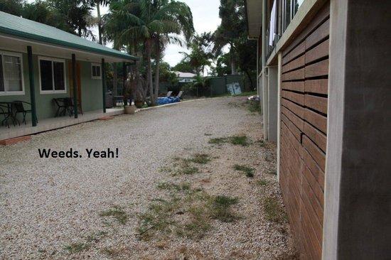 Koala Tree Motel Port Macquarie Reviews