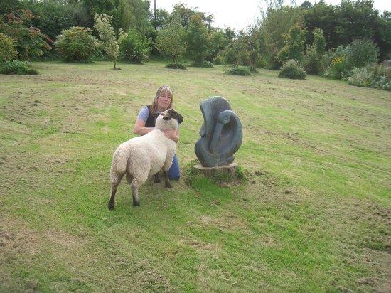 Gwarllwyn Bed & Breakfast : George the friendly sheep