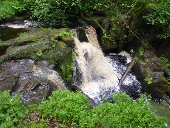 Hareshaw Linn: A real delight