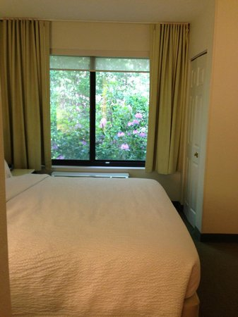 SpringHill Suites Asheville : All nature right outside your window