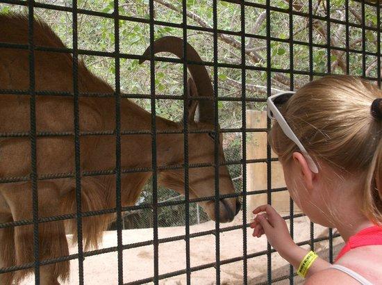 Vallarta Zoo: Feeding one of the animals