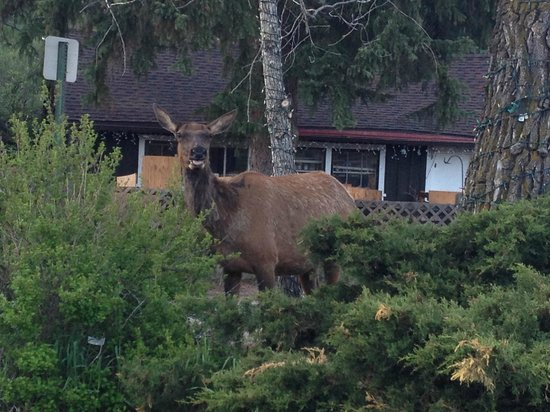 Highland Haven Creekside Inn: A visitor we found on a morning walk, just steps from the lodge.