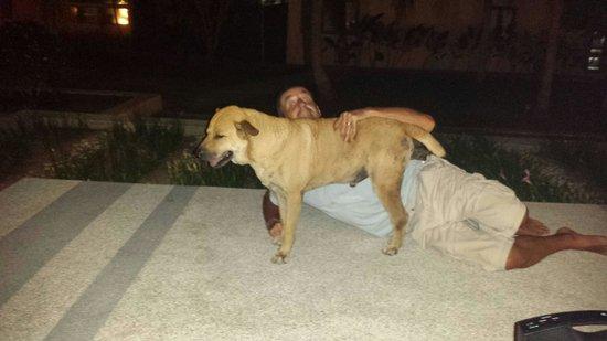 Centra by Centara Coconut Beach Resort Samui : Scoddy please feed him