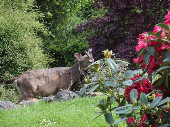 Wildwood Manor Bed and Breakfast: Deer outside the patio!