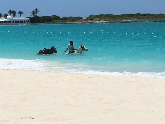 Belmond Cap Juluca : Horses you can ride (we did)- very nice!