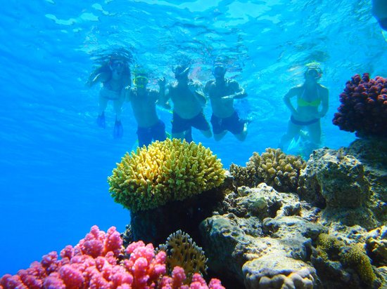 Viva Sharm Hotel: Tiran Island Snorkelling