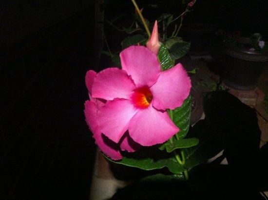 Brickhouse Inn Bed & Breakfast: Beautiful flowers in the garden