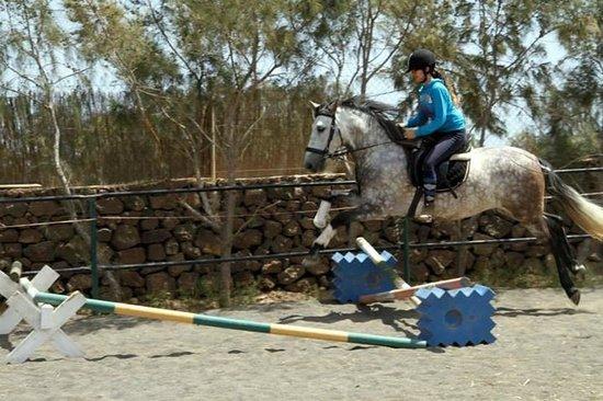 Centro Hípico Los Pinos Verdes: horse riding fuerteventura/los pinos verdes lajares