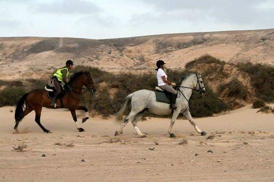 Centro Hípico Los Pinos Verdes: excursions/horse riding los pinos verdes lajares