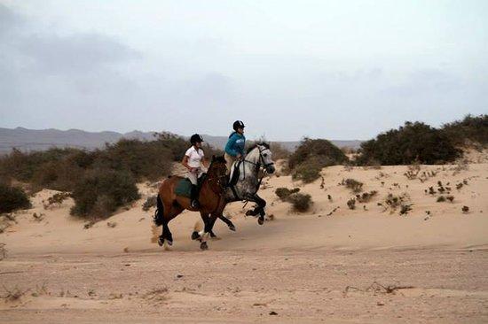 Centro Hípico Los Pinos Verdes: excursions/horse riding fuerteventura