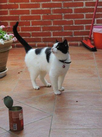 """La Maison Mayeur : Le chat de la maison """"Squat"""""""