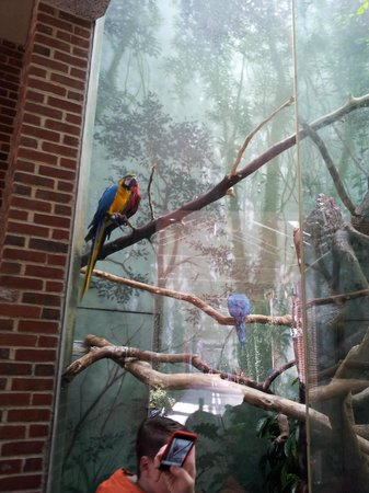 Central Park Zoo: uccelli