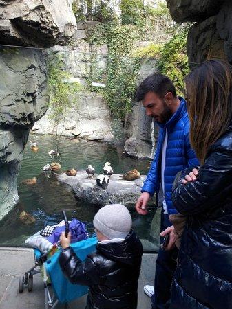 Central Park Zoo: pinquini