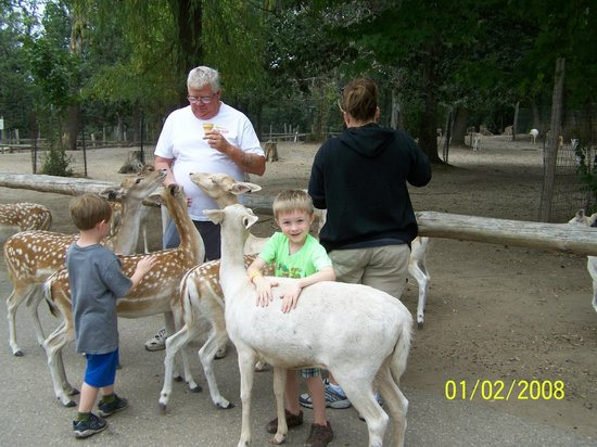 Wisconsin Deer Park: Mason thinks the deer are friendly