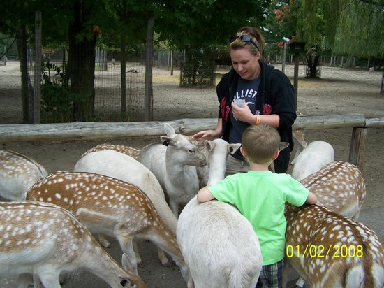 Wisconsin Deer Park : Jill feeding the deer as fast as she can!!!