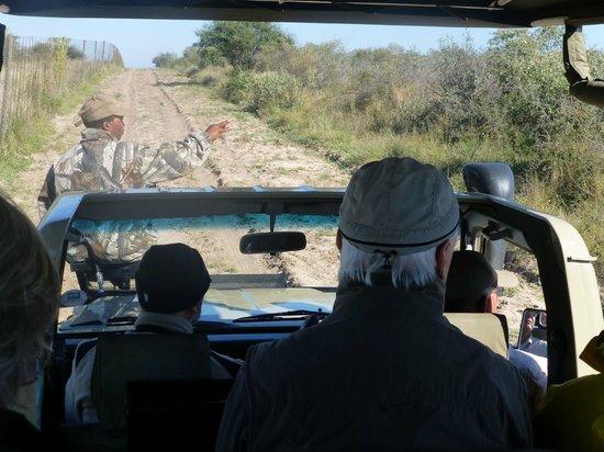 Dinaka Safari Lodge: Auf der Suche nach Löwen