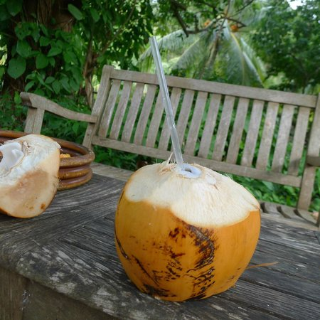 Guana Island: Coconuts prepared for us fresh from orchard