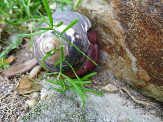 Guana Island: Hermit crab