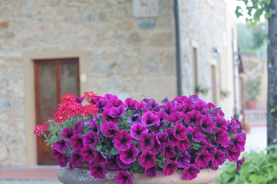 Agriturismo Il Castagnolino: Flores do jardim e prédio principal ao fundo