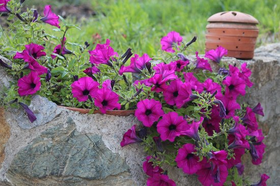 Agriturismo Il Castagnolino: Flores do jardim