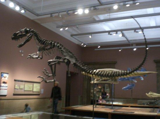 Exhibition Displays Glasgow : Dinosaur exhibit picture of kelvingrove art gallery and