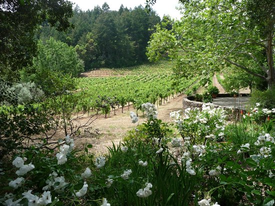 Stony Hill Vineyard: White roses and grapes