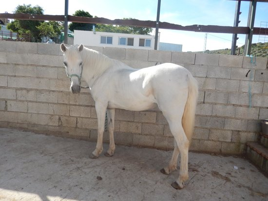 Sierra Pelada Horse Riding School : Luna
