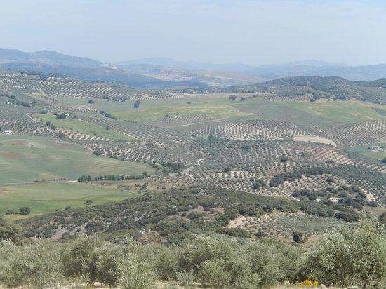 Sierra Pelada Horse Riding School: The view