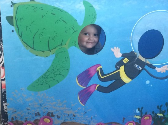 Mote Marine Laboratory and Aquarium: Everyone can find something at Mote