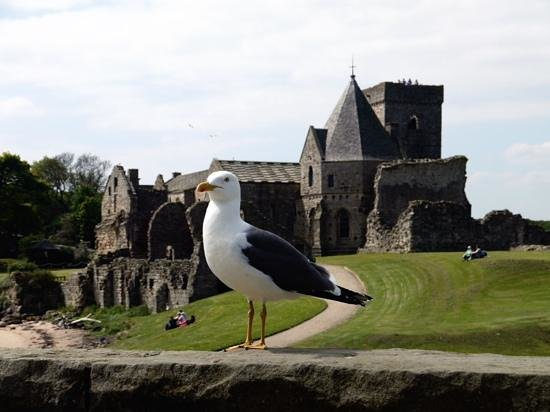 Maid of the Forth: Seagull and Inchcolm Abbey