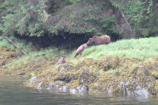 Prince Rupert Adventure Tours: Mom and cubs