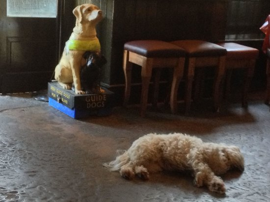 The Blind Piper: Pub dog