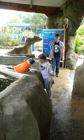 Weymouth SEA LIFE Adventure Park: Touch the starfish in the rockpools