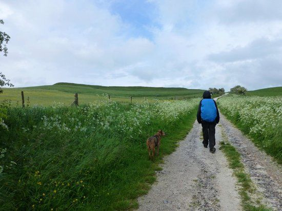 The Ridgeway National Trail: one of the long miles heading towards the White Horse